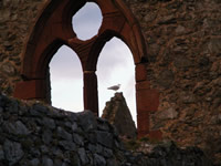Seagull  in Peel Castle