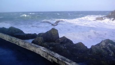 Seagull at Fenella, by Melissa Aye