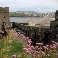 Pinks in Peel Castle, by Janice Quilliam