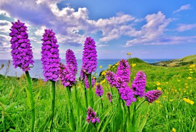 Wild flowers at Niarbyl, by Mike Bonner