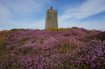 Corrins Folly by Alison Cowin