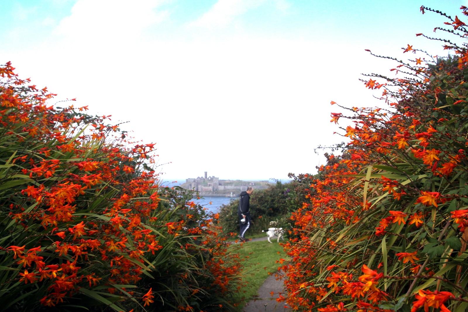 Headland Wildflowers by Tony Faragher